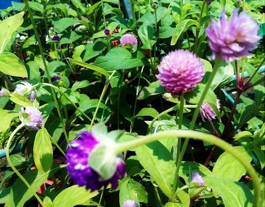 גומפרנה מכניסה שובבות לגינה