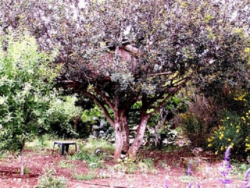 זכרונות ילדות - על עצים